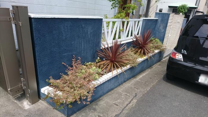 花壇の下草