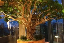 ウッドツリー