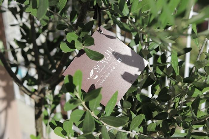 オリーブ 創樹
