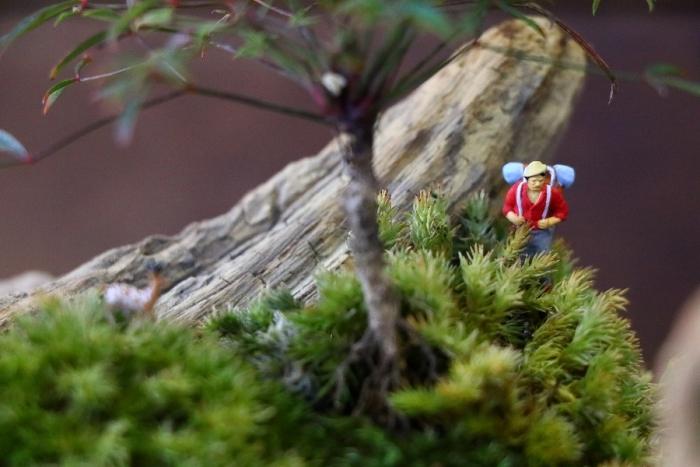 流木と苔と日常