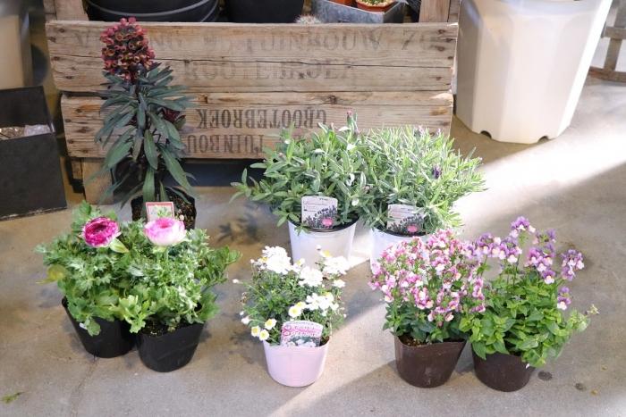 花壇使用例