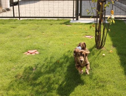 愛犬が元気よく安心して走り回れるお庭が完成!!