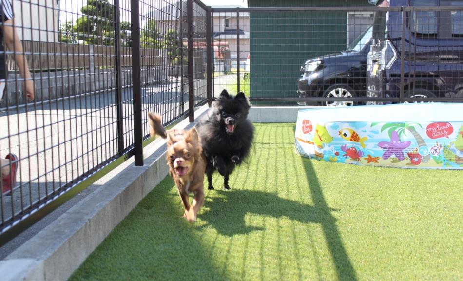 自宅に愛犬が安心して走り回れる空間ができたなら…、あなたならどんなことをさせてあげたいですか?